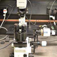 Olympus IX71 inverted phase/fluorescence microscopes