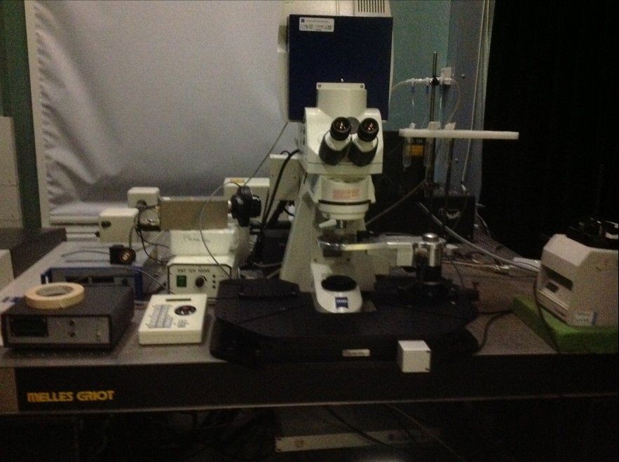 Multi-photon Confocal microscope