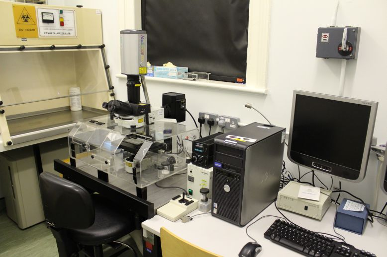 Bio-Rad Confocal Microscope/ Olympus BX51 Upright Microscope